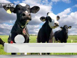 Fotobehang met een koe bestellen